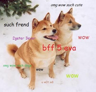 Two Best Friend Doges