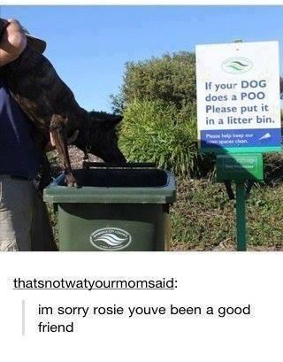 """I hate it when my dog """"does a poo"""""""