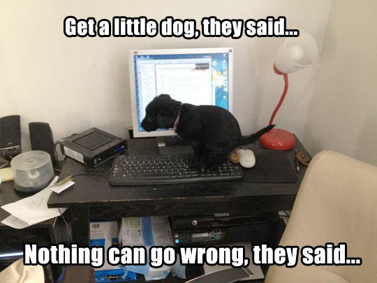 db4 crapping puppy it will be fun, they said know your meme