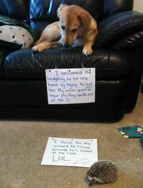Dogshaming Done Right