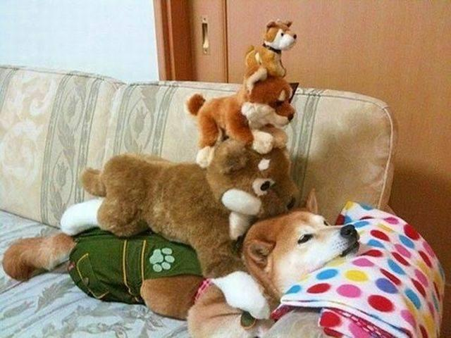 """Every day poor Shibes get piled on. You can help stop this, help Shibe and like this picture.  """"Not wow, halp"""""""
