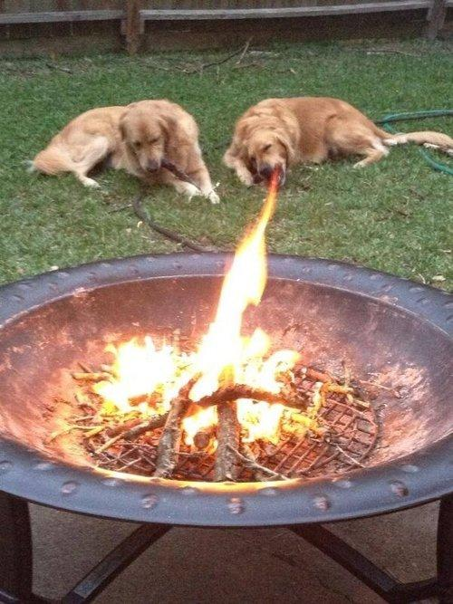 Fire-breathing dog
