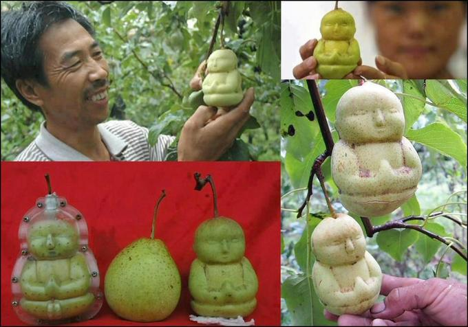 Pear Level: Asian
