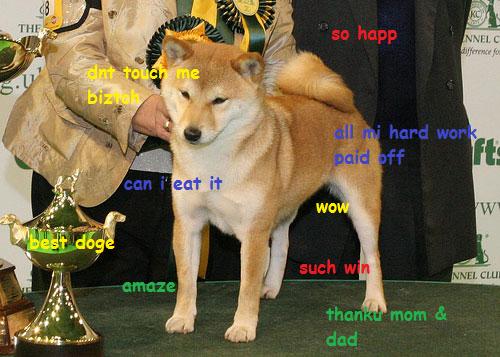 best doge