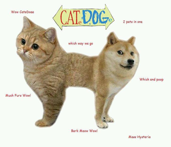 CateDoge