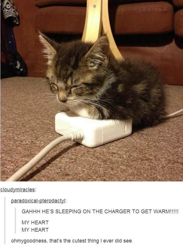 A Cat on a Charger