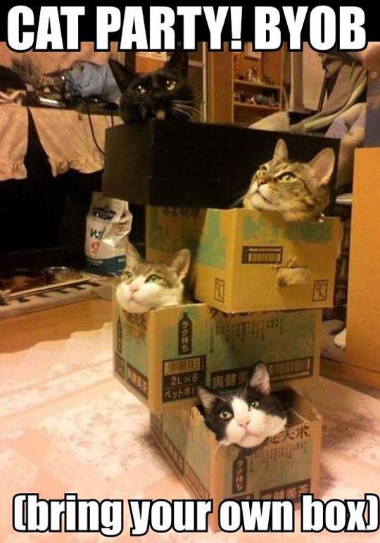 Box Party BYOB