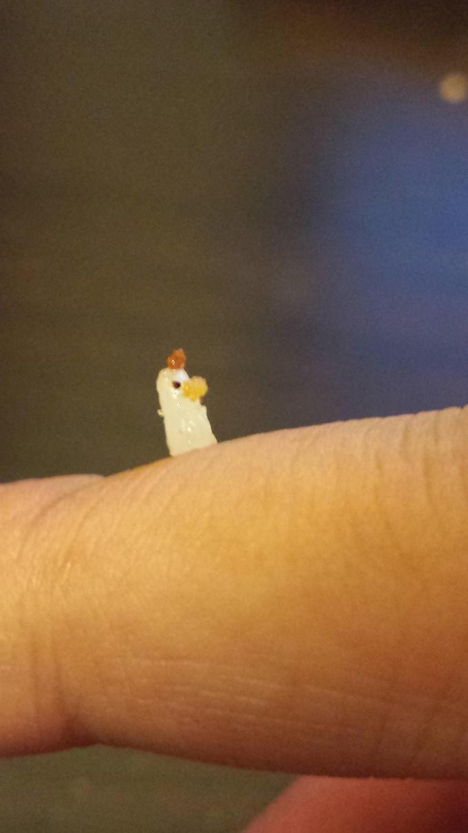 I was eating chicken with rice and it got stuck on my finger
