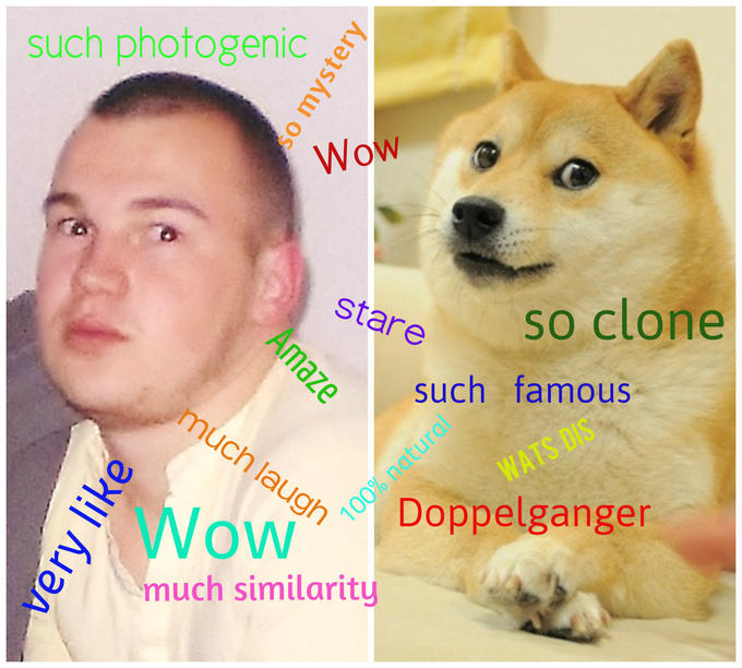 Wow ! My  roommate is doge`s doppelganger