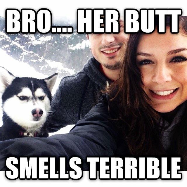 4a7 jealous husky know your meme,Jealous Meme