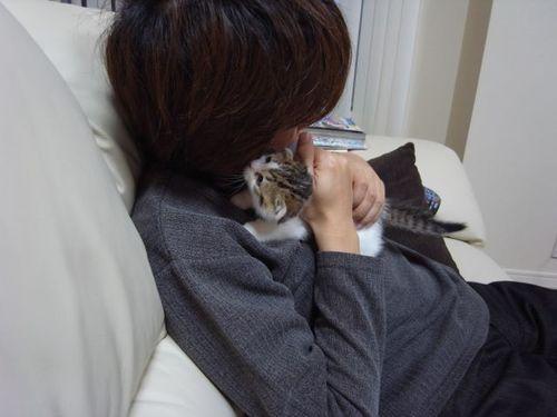 Sakurai and his Cat