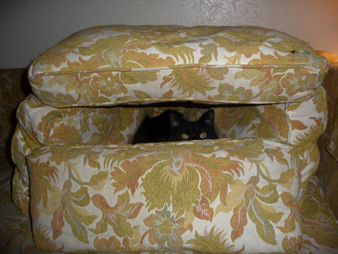 1st Cat Fort