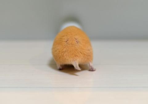 orange butt