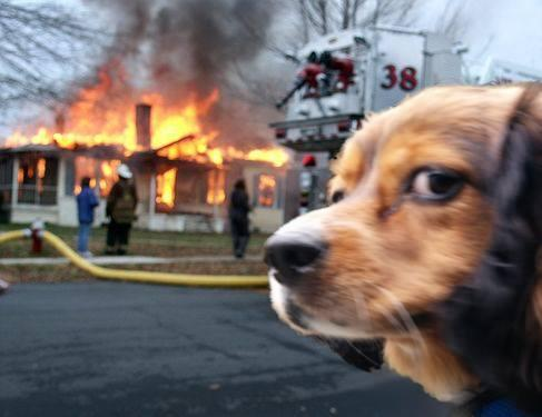 b33 disaster dog disaster girl know your meme