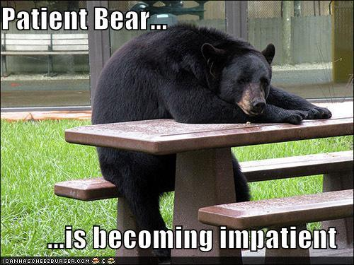 779 patient bear is losing patience with your shenanigans patient
