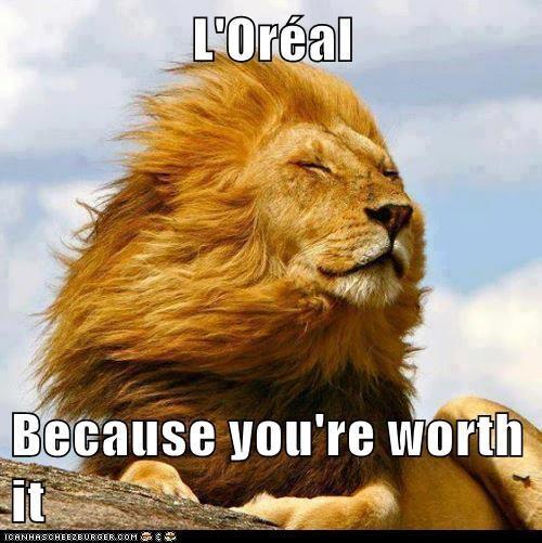 lion meme wwwpixsharkcom images galleries with a bite