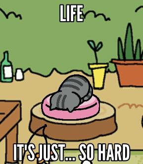 Why Is Cat Food So Hard