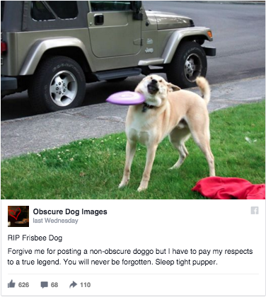 955 frisbee doge death announcement frisbee doge know your meme