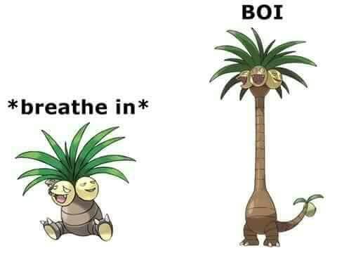 Boi   Alola Exeggutor   Know Your Meme