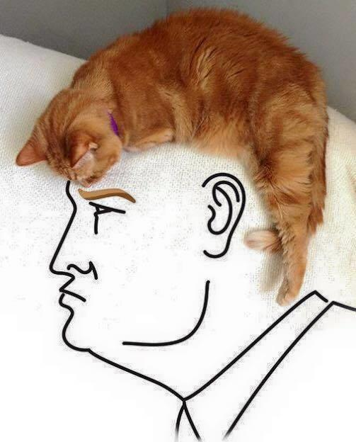 b82 cat hair donald trump know your meme
