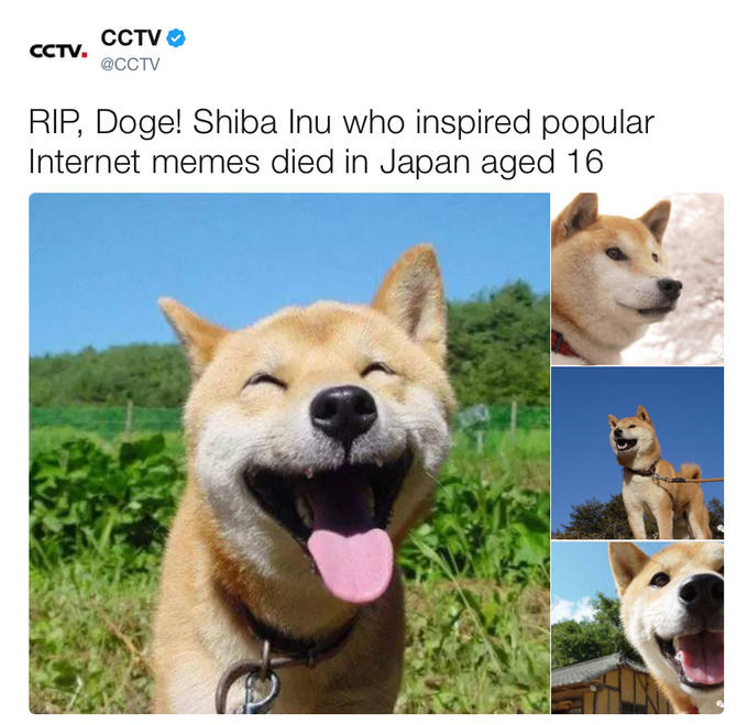 Doge know your meme cctv cctv cctv cctv rip doge shiba inu who inspired popular solutioingenieria Images