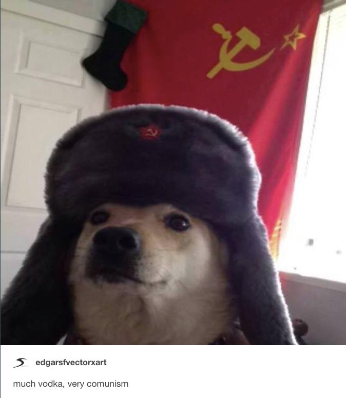 Comrade Doggo original pic