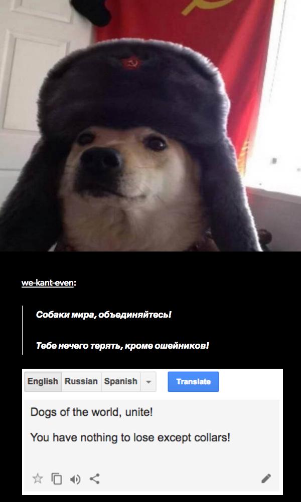 Comrade Doggo meme of funny alteranate ending for the communist manifesto