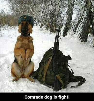 comrade Doggo meme with soldier version of our beloved leader