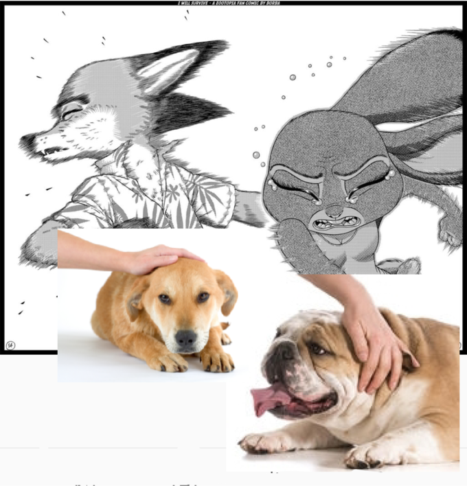 Vidoes On Netendo Dogs And Cats