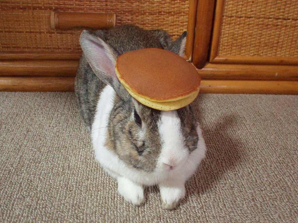 http://i0.kym-cdn.com/photos/images/original/000/007/445/pancake_bunny.jpg?1249339142