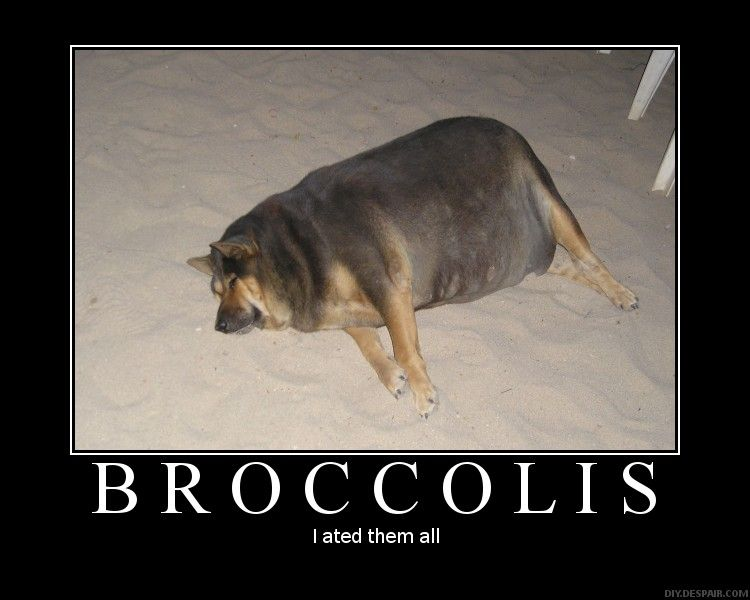 Too_much_brocollis image 11309] broccoli dog know your meme