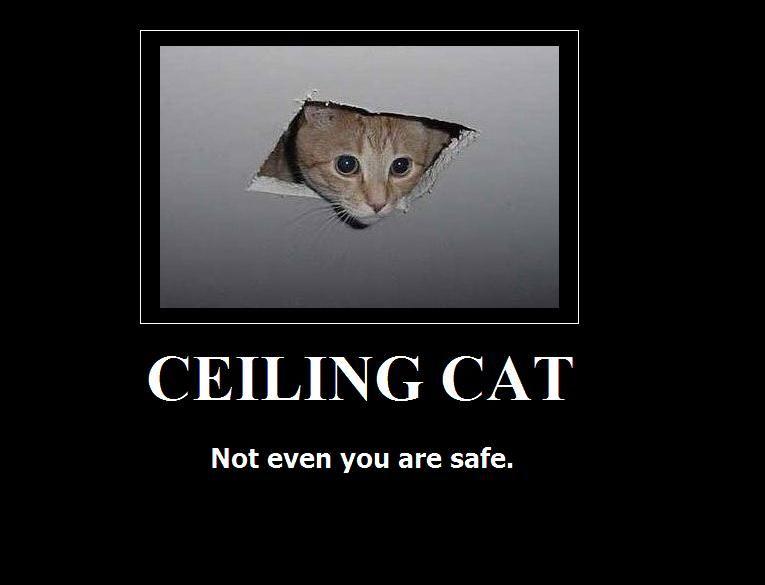 Image 16656 Ceiling Cat Know Your Meme