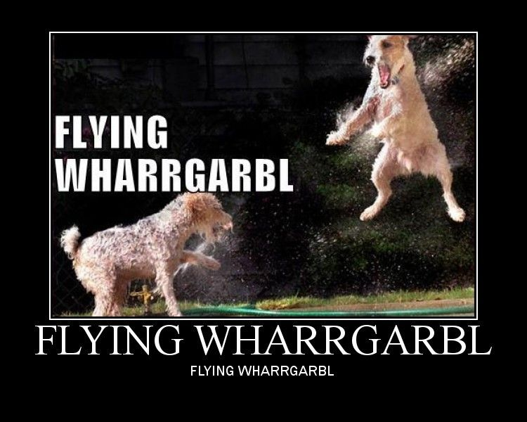 Army vet buys a plane to save hundreds of dogs from death row |Flying Dog Meme