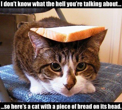 How Animals Eat Their Food Part  Meme