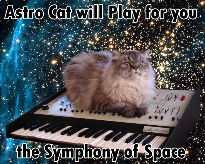 cat cat on a keyboard in space know your meme