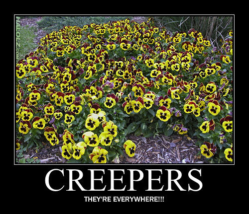 Halolz dot com minecraft creeper flowers motivational