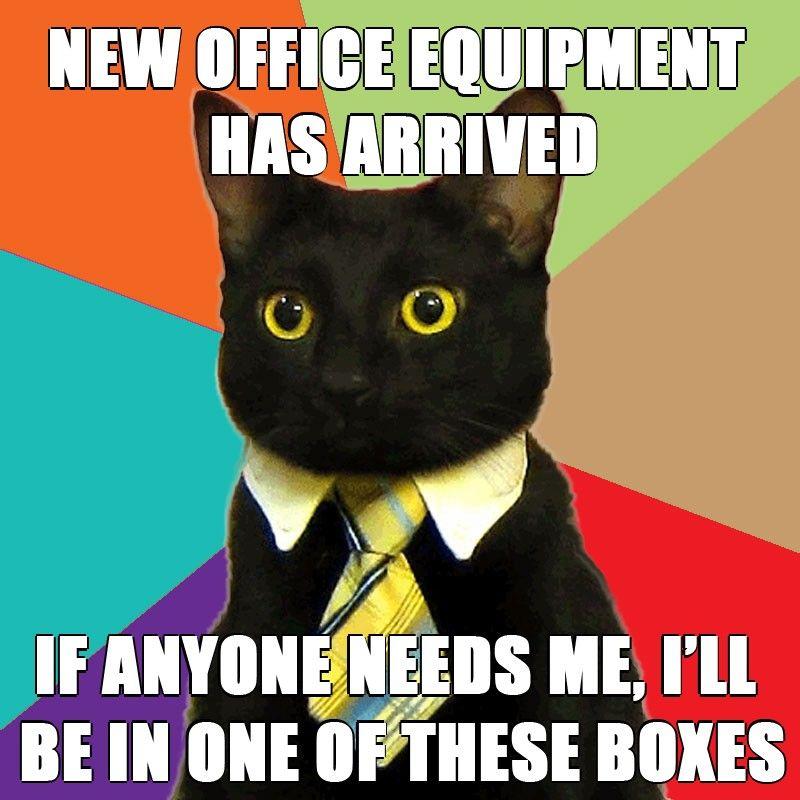 9YZQJ business cat know your meme,Cat Boss Meme