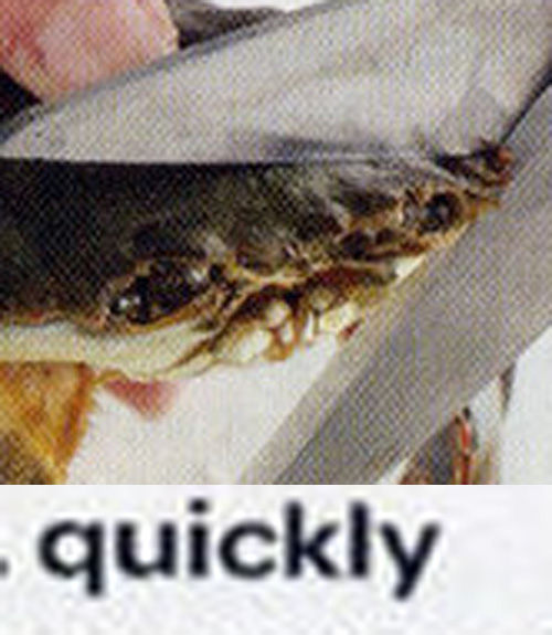 1302290535147 image 113235] this kills the crab know your meme