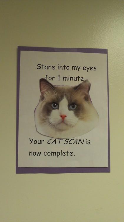 d82 cat scan cats know your meme