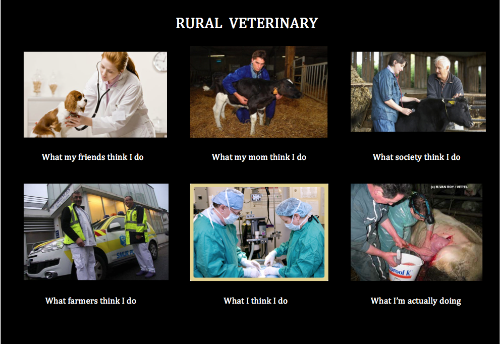 7e8 rural veterinary what people think i do what i really do know