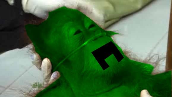 ssssssss... sssss...   Dying Orangutan   Know Your Meme