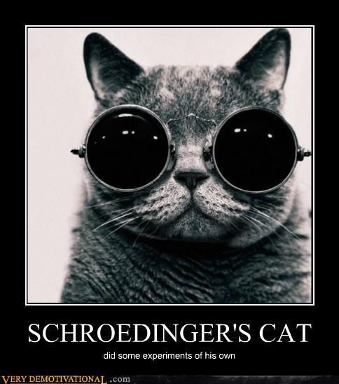 Image - 344694] | Schrodinger's Cat | Know Your Meme