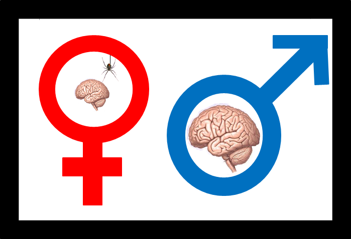 womens brain essay However, both sexes have similar brain weight to body weight ratios 13 in men, the second digit is often shorter than the fourth digit.