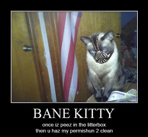 9ae bane kitty's litter batman know your meme