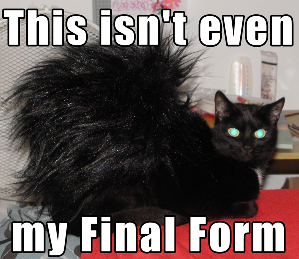 Rooster Cat | This Isn't Even My Final Form | Know Your Meme