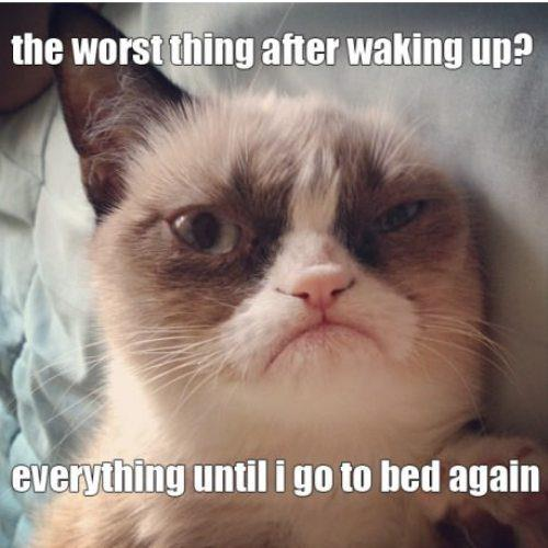 [Image - 436646] | Grumpy Cat | Know Your Meme