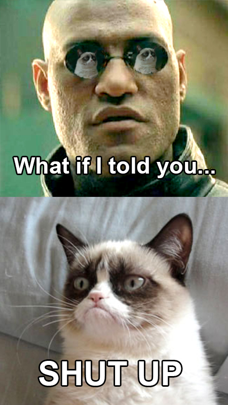dee what if i told you grumpy cat know your meme,What If I Told You Meme