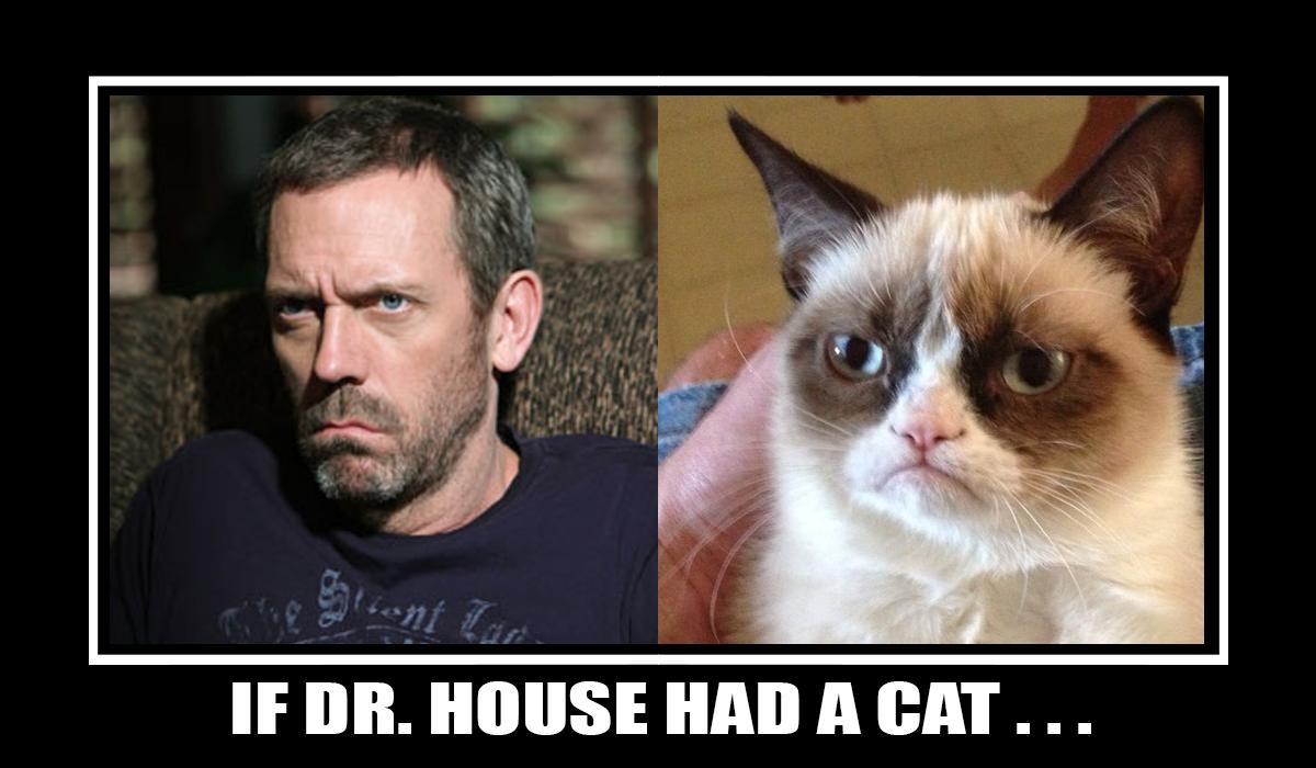 dr house face meme. if house had a cat dr face meme