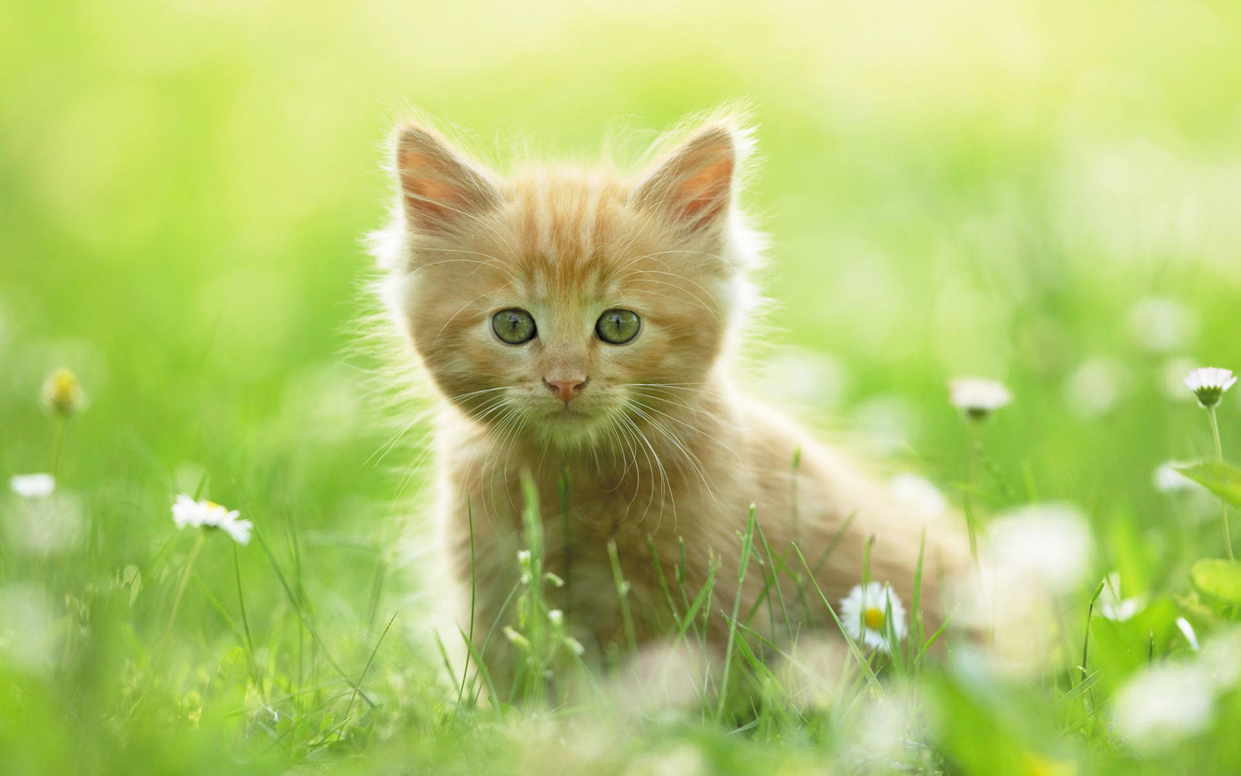 Cute Kitten Wallpaper Cats