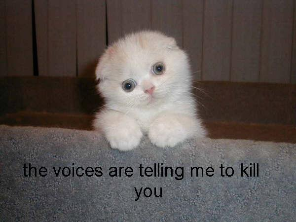 636 image 492231] fluffy white cat know your meme